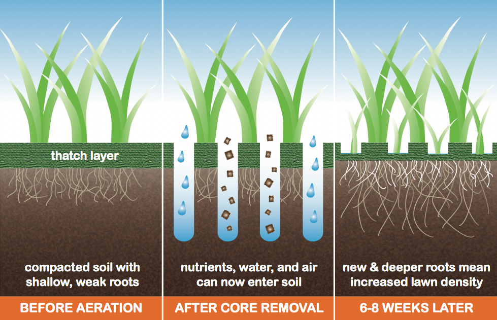 Lawn aeration before after